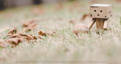 Senza pensarci...pensami (Cammino & Vivo Capovolto ☆ Claudio ☆) Tags: canon sigma sigma50mmf14exdg bokeh luci light sfocato vintage danbo pensami claudio claudiol giardino erba foglie grass garden leaves