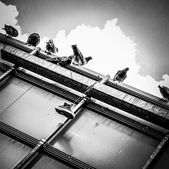 41696A8B-29B5-415D-9DEB-18A5F93E9758 (Kathi Huidobro) Tags: fashionvictim fashiononashoestring london stolenproperty cityscene citylife urban roadsigns blackwhite bw monochrome streetphotography stolen discarded converse pigeons