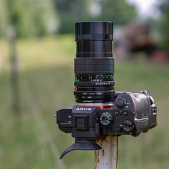 SONY ⍺7III & vintage Canon nFD 135mm ƒ/2.8 (.: mike   MKvip Beauty :.) Tags: sony⍺7markiii sony⍺7iii sonyilce7m3 sonyalpha7m3 sonyalpha sony alpha emount ⍺7iii ilce7m3 canon fd nfd canonnfd135mmƒ28 sony⍺6000 sonyilce6000 sonyalpha6000 ⍺6000 ilce6000 sonye50mmƒ18oss sel50f18 lensporn cameraporn gearshot availablelight naturallight backlight backlighting maximiliansau wörthamrhein germany europe mth mkvip