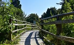 Le petit pont de bois (Diegojack) Tags: cheseauxnoréaz vaud suisse paysages d7200 nikon nikonpassion bois pont perspective ombres