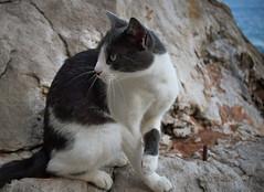 One of the residents (Jocelyn777) Tags: rocks stones beach adriaticsea dubrovnik dalmatia croatia balkans travel