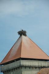imgp9947 (Mr. Pi) Tags: animals village birds church nest fortress romania cata cața