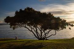 New Zealand Holiday (*Hairbear) Tags: laketaupo newzealand northisland sunset holiday taupo