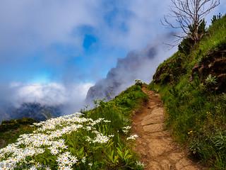 Madeira / Path to pico ruivo
