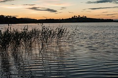 Mid Summer Night (Matts__Pics) Tags: ripples sunset reeds aftersun evening fermanagh lougherne