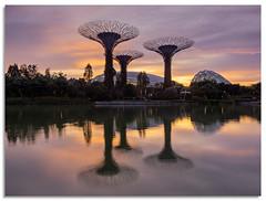 Sunrise over dragon fly lake (.Wadders) Tags: dragonflylake gardensbythebay garden lake singapore sunrise d600 2018 ngc nikkor1635mmf4 reflection