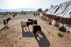 20180330-_DSC0154.jpg (drs.sarajevo) Tags: sarvestan ruraliran iran nomads farsprovince chamsatribe