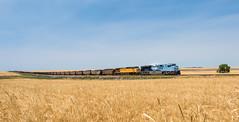 RR-20180702-LimonSub-25-Edit (skyviewtim) Tags: bennett coalload coloradorailroads coloradotrains up1982 wheat wheatfield colorado unitedstates us