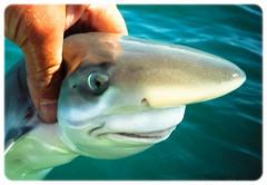 Anglų lietuvių žodynas. Žodis thornback reiškia n zool. (dygioji) raja (žuvis) lietuviškai.