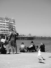 dislike (slavamanc) Tags: llandudno wales pier sea beach girl seagull faceexpression funny monochrome blackandwhite candid