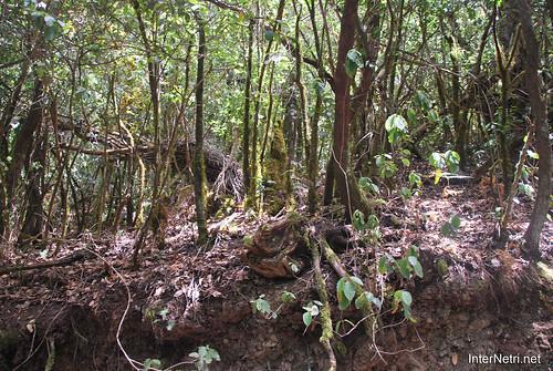 Національний парк Гарахонай, Гомера, Канарські острови  InterNetri  0727
