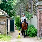 Paarden in Den Haag thumbnail