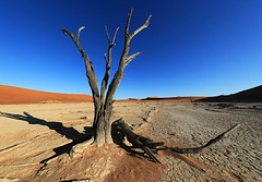 Deadvlei - Sossusvlei - Namibia (lotusblancphotography) Tags: africa afrique namibia nature desert désert tree arbre dune