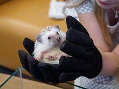 Cheese Hedgehog Cafe (AMcUK) Tags: chiyodaku tōkyōto japan jp em10 omdem10 omdem10mkii em10mkii omd olympus olympusuk m43 micro43rds micro43 microfourthirds nippon tokyo akihabara hedgehog