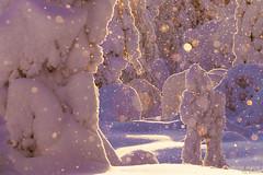 Snowman (Karl Adami - www.karladami.com) Tags: snowman golden sunset riisitunturinationalpark finnish finland luonto suomi wintery harsh cold beautiful snowy covered 2018 february northern european wild nature