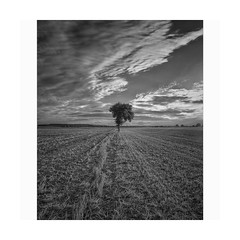 Bw series (spotfer) Tags: field nowhere sarthe paysdelaloire france europe sebastienpotfer noiretblanc nb photographie photograph photography paysage travel photo explore voyage tree landscape nature rural artistic art fujifilm fujixm1 fuji xm1 portfolio fineart bwphotography blackandwhite bw