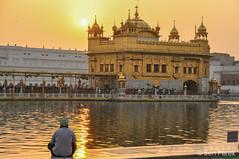 DSC_0821-2 (Ben Perek Photography) Tags: india punjab amritsar asia hindu sikh golden temple incredible beauty sunset sunrise sun gold piligrimage