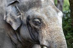 180718_007_3063 (123_456) Tags: zoo diergaarde blijdorp rotterdam netherlands