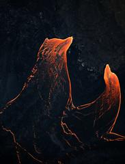 Lava Life (mitalpatelphoto) Tags: adventure aerial earth explore hawaii helicopter hilo landscape lava nature nikon pahoa photography rock travel usa visit volcano pāhoa unitedstates us