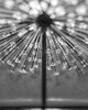 Genesis Alternate 7-Gus Wortham Memorial Fountain_4x5_2015 (Mabry Campbell) Tags: flickrexplore explored explore edge80 eleanortinsleypark gusworthammemorialfountain harriscounty houston tx texas usa unitedstatesofamerica abstract blackandwhite blur fineart fineartphotography fountain image infrared lensbaby lensbabycomposerpro nopeople photo photograph photography sculpture water mabrycampbell july 2015 july162015 20150716img8037 50mm ¹⁄₅₀₀₀sec 100