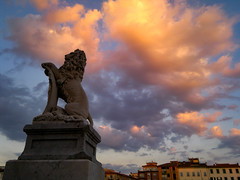 The lion and the clouds (engrailed80) Tags: pisa lungarno sunset sunsetporn instalike carlzeisslenses sky skyporn nuvole clouds cloudsporn reflections cloudscape rowing italy color magics followme nofilters instagood toscana europe igerspisa volgopisa volgotoscana igersitalia beautifuldestinations awesomephotographers favskies unlimitedsunset