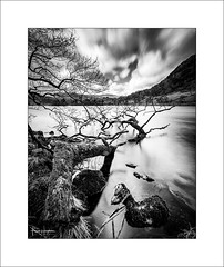 Interlude XII (Frank Hoogeboom) Tags: unitedkingdom uk rydalwater rydal lakedistrict cumbria lakes water tree trunk branch landscape waterscape blackandwhite monochrome fineart longexposure england british clouds sky dramatic movement
