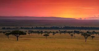 As the curtain opens on Masai Mara