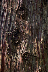 Rought bark texture cryptomeria japonica (Midoritai) Tags: texture rough red gray bark tree cryptomeria japonica japan japanese china chinese old wood nature brown pattern natural plant background wooden textured closeup surface trunk detail material timber organic forest dry lumber macro hard park tan wallpaper skin aging dirt dirty outdoor square environment tracery wall rugged design grunge