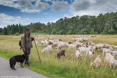 Schaapsherder Haaksbergerveen (mark van veen) Tags: bewolkt border grens groothoek historie landschap luc overijssel overzicht wideangle zomer