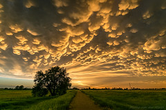 Mammatus over north-central Nebraska (mesocyclone70) Tags: mammatus thunderstorm stormchase color colour sunset usa nebraska storm landscape evening scenic scenery therebeastormabrewin road tree