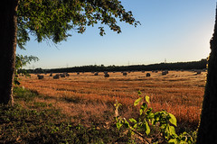 Kornfeld (haraldklein2201) Tags: feld field getreide grain kornfeld