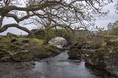 Bridge By Eas Fors Waterfall (Glenn Pye) Tags: easforswaterfall water bridge bridges tree trees rivers river nikon nikond7200 isleofmull scotland