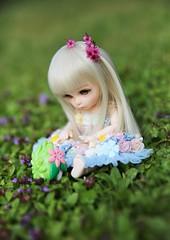 In a flowerfield... ♥ (SunShineRu) Tags: pukifee pkf ant fairyland bjd ball jointed doll dolls tiny pokemon pokémon shaymin flower