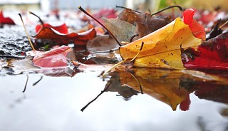 A puddle full of leaves