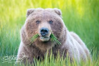 Mum bear