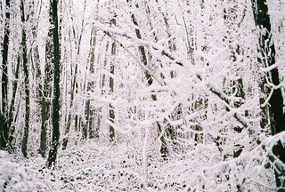 White Forest 2