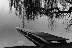 _DSC6973 (Nicolas Fazio) Tags: niebla parque muelle puente