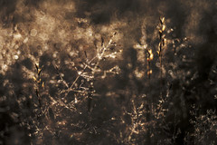 Where there is light there is darkness. (look to see) Tags: light licht darkness duisternis sunrise zonsopkomst saarburg duitsland germany bokeh vintagelens 2018 gras grasses