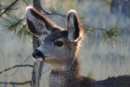 Bryce Canyon - Did I Hear Something ?