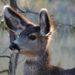 Bryce Canyon - Did I Hear Something ? thumbnail