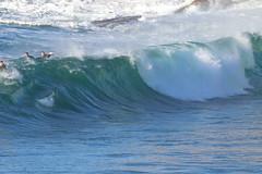 2018.07.15.08.34.53-ESBS Bronte Seq 05-005 (www.davidmolloyphotography.com) Tags: bodysurf bodysurfing bodysurfer bronte australia newsouthwales sydney surf surfing wave