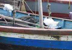 Ogle July 2018 #11 (*Amanda Richards) Tags: ogle atlanticcoast atlantic guyana georgetown seawall fishingboats fishing ibis
