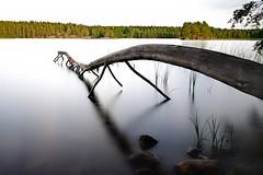 trädstam (Håkan Jylhä (Thanks for +500000 views)) Tags: träd vatten tree water old gammal trädstam long exposure bulb sony rx10 håkan jylhä sweden sverige