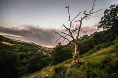 Dead Tree (Glen Parry Photography) Tags: glenparryphotography landscape calderdale country coutntryside d7000 hiking hills nikon outdoors sigma sigma1020mm sunset todmorden walking tree green