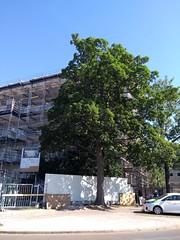 Tree and buildings (Petit_louis) Tags: copenhagen arbres tree