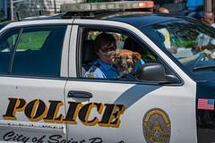 St. Paul Police Reserves Dog (Tony Webster) Tags: 2018 minnesota rondo rondoavenueinc rondodays rondodaysparade sppd saintpaul saintpaulpolicedepartment stpaul stpaulpolice stpaulpolicedepartment parade police unitedstates us