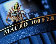 Macro Lens (dianne_stankiewicz) Tags: photographygear gear photographyequipment photography camera macromondays hmm jumpingspider jumping spider macro lens cameragear