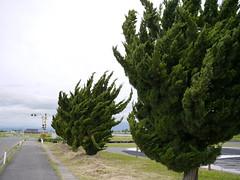 The form of the wind (しまむー) Tags: panasonic lumix gx1 g 20mm f17 asph natural train tsugaru free pass 津軽フリーパス