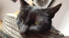 Happy Caturday (Clare_leeloo) Tags: cutecat cats blackcat kitty felines happycaturday