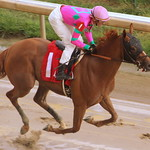 Churchill Downs Race: Stylitude wins thumbnail